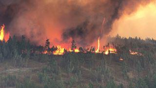 Le feu, entre la survie et le désastre, comment fonctionne-t-il?