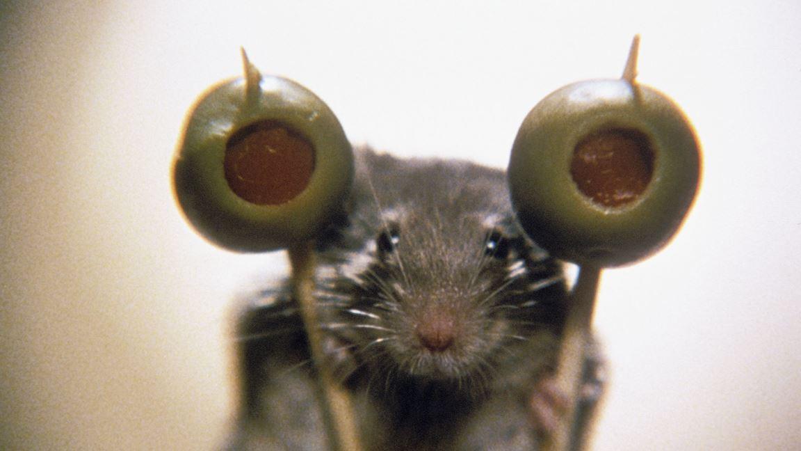 Petite souris, gros ennuis!