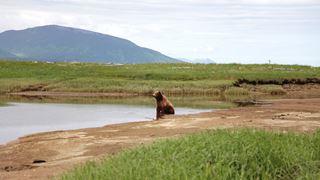Vie et survie d'une faune extraordinaire sur les terres polaires