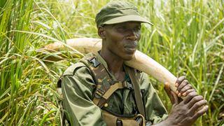 Explorer, s'informer, comprendre : des documentaires pour changer le monde!