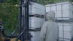 Cap sur le Lac-Saint-Jean pour stimuler la pollinisation des bleuetières!'