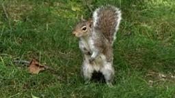 De mignonnes petites créatures à poils qui semblent douces et dociles