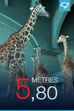 5, 80 mètres