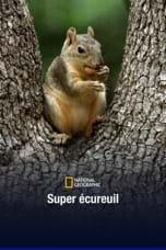 Super écureuil