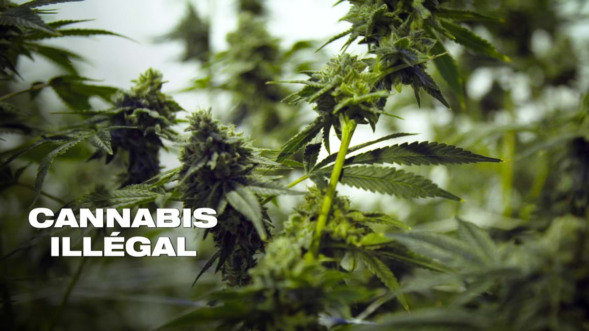 Cannabis illégal
