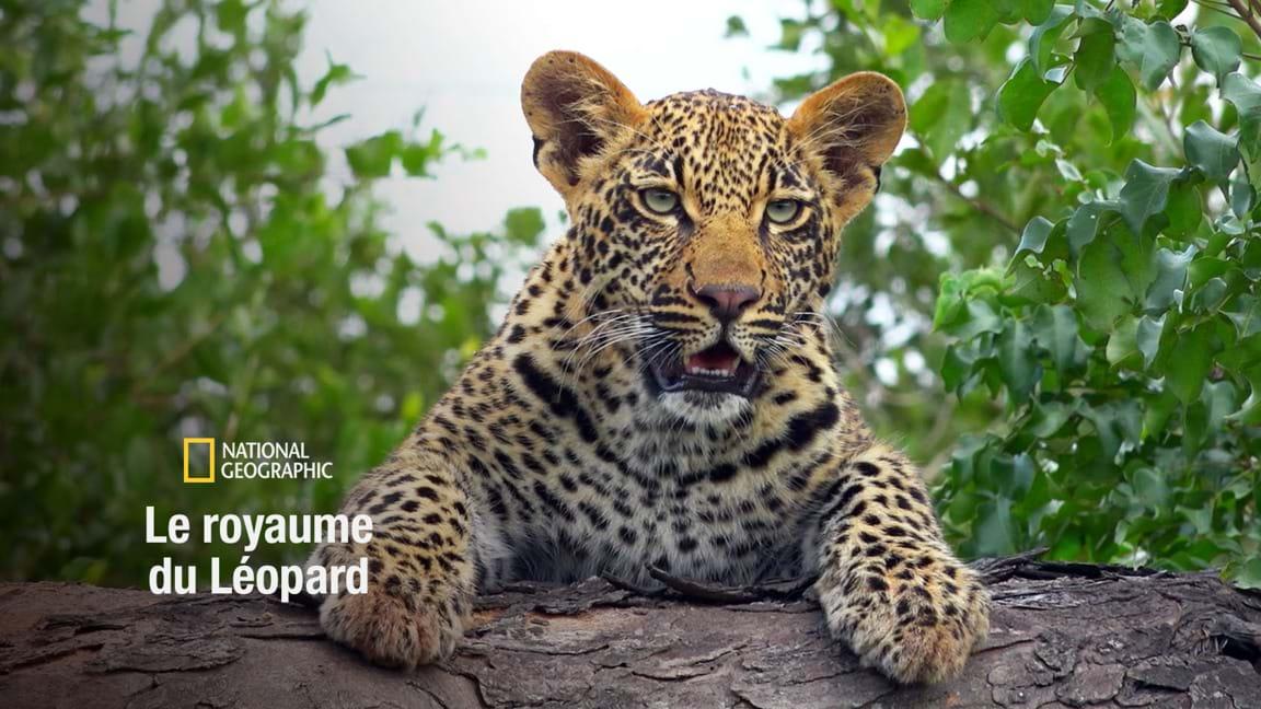 Le royaume du léopard