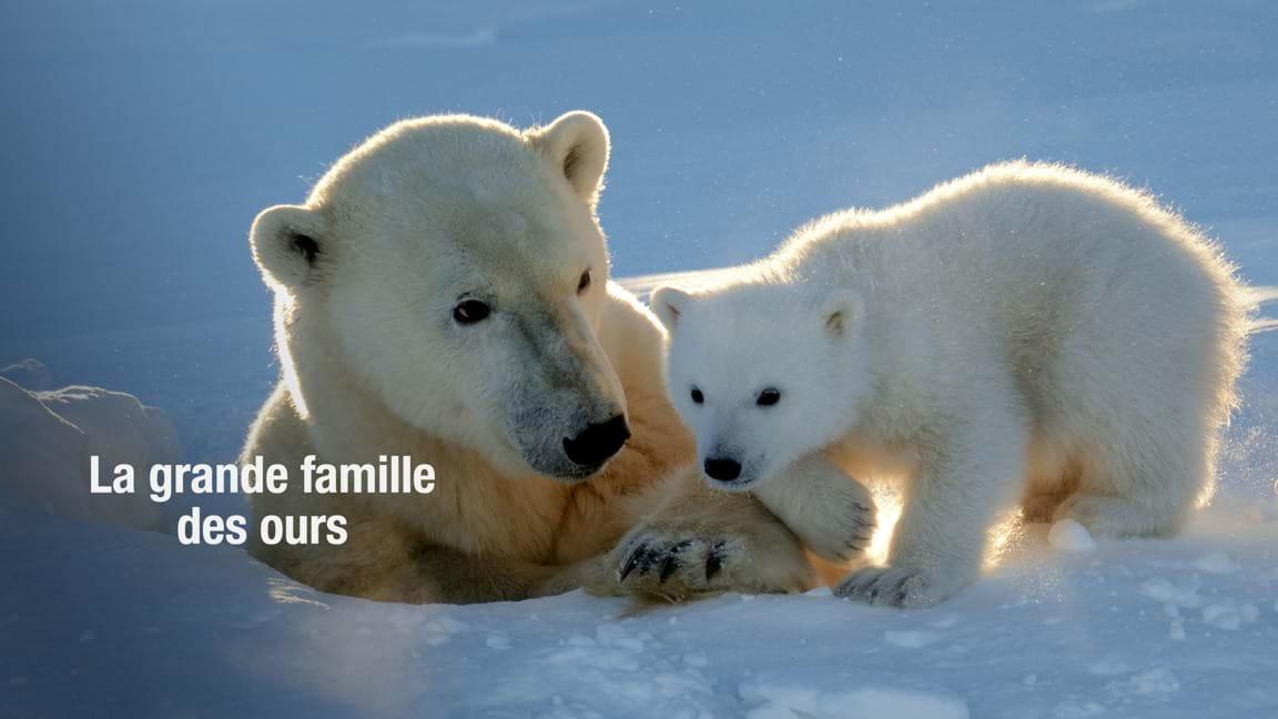 La grande famille des ours