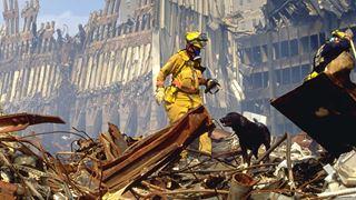 Plus de 300 chiens ont sauvé des vies après les attentats de New York