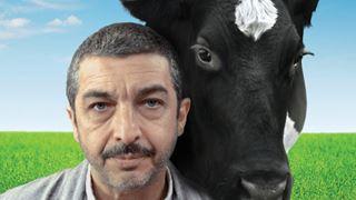 L'histoire d'un Argentin et d'un Chinois unis par une vache tombée du ciel!