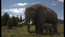 Pourquoi les mastodontes se sont-ils éteints?