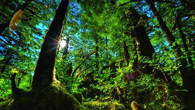 Les forêts d'Amérique, paradis ou enfers?